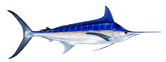 sport-fishing-guide-3