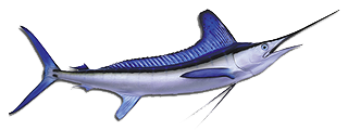 sport-fishing-guide-4