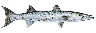 sport-fishing-guide-5