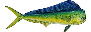 sport-fishing-guide-6