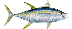 sport-fishing-guide-7