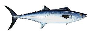 sport-fishing-guide-8