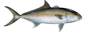 sport-fishing-guide-9